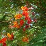 fleurs-au-bresil