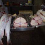 Belem-do-Para-Marché-aux-poissons-11