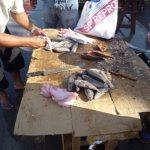 Belem-do-Para-Marché-aux-poissons-5