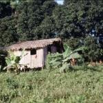 une case de caboclo